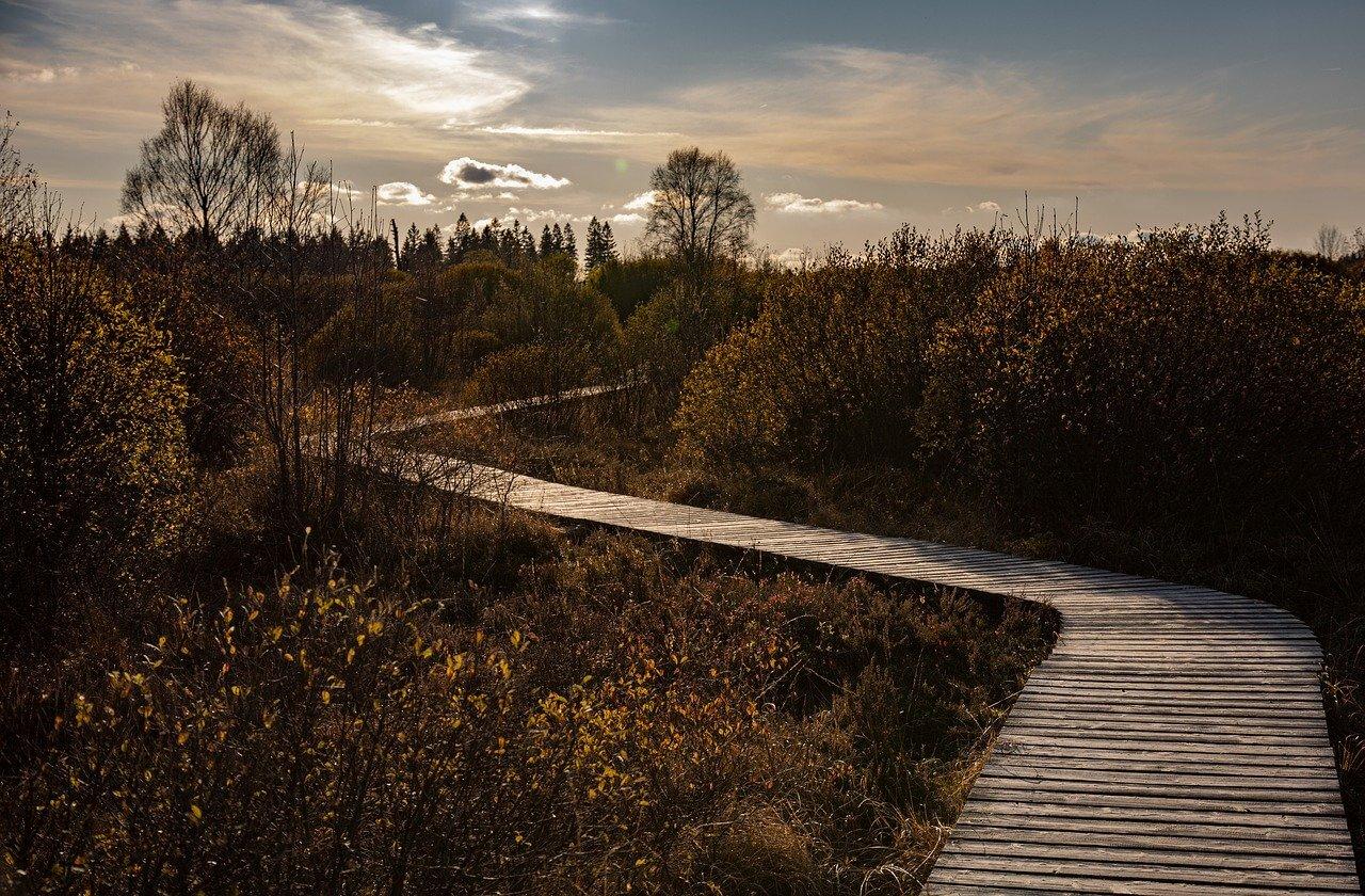 haute fagne sentier ponton en bois itinéraire en belgique