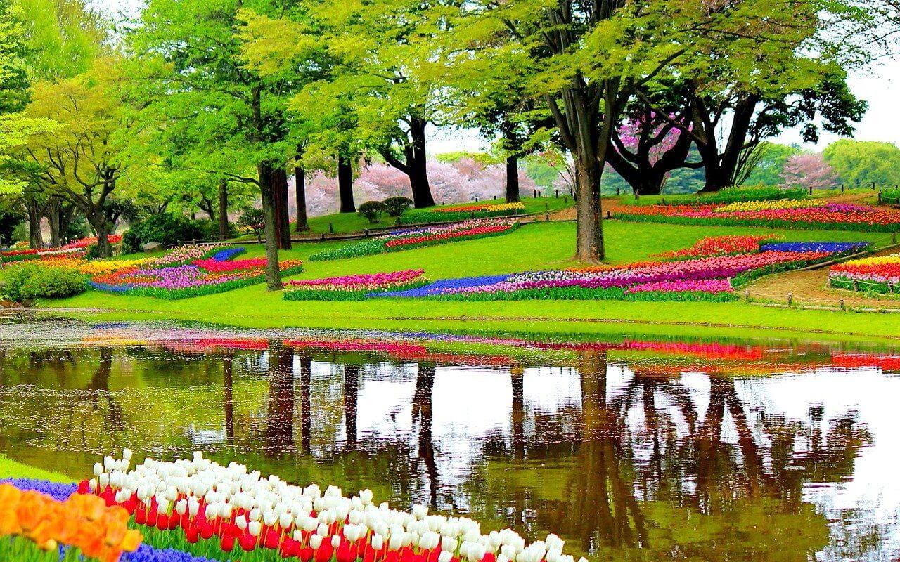jardin de keukenhof bassin tulipes arbres