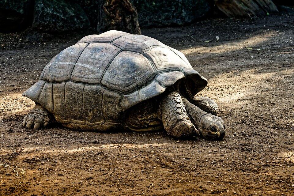 tortue animaux de Madagascar