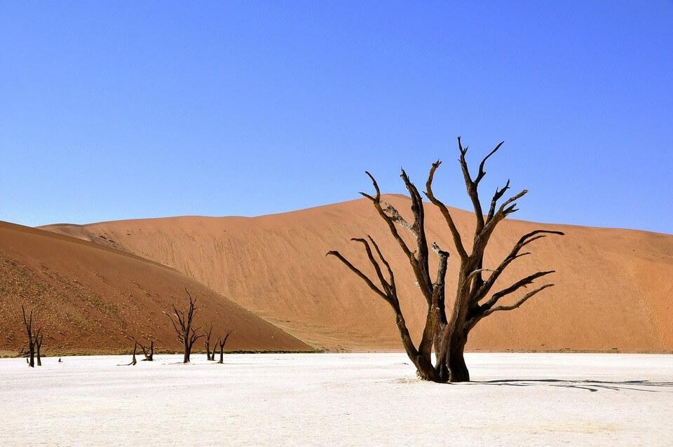 namibie arbre desert ou partir au printemps