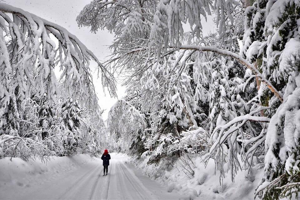 balade en foret neige canada températures les plus froides du monde