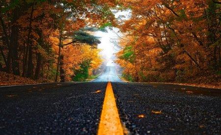 route automne feuilles arbres organiser un road trip
