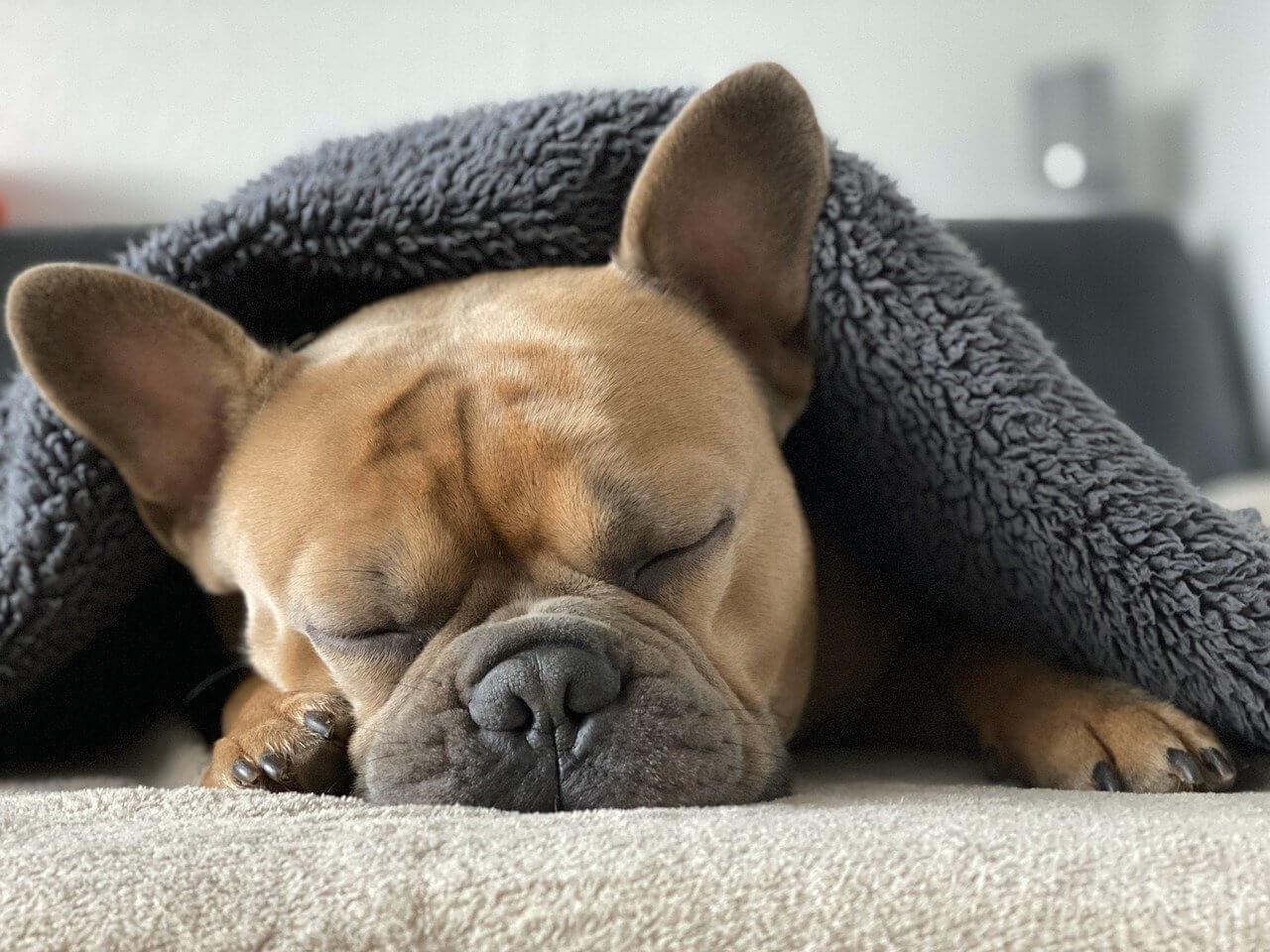 chien sous un plaid montcuq en hiver