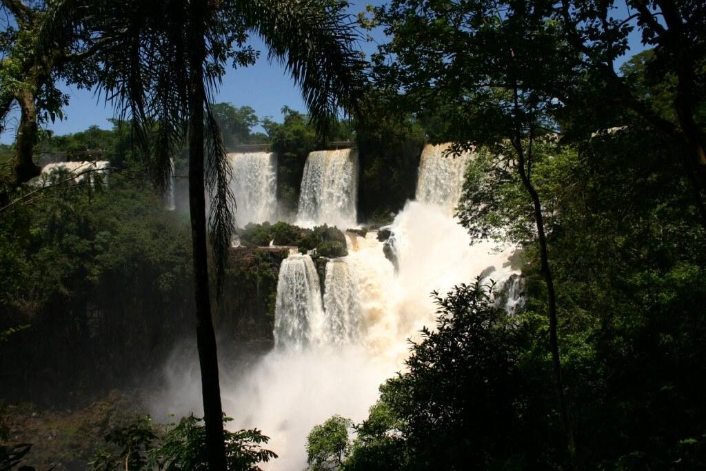 Les chutes d'Iguazú sont un véritable sanctuaire pour les animaux menacés d'extinction, derniers survivants de la forêt atlantique.