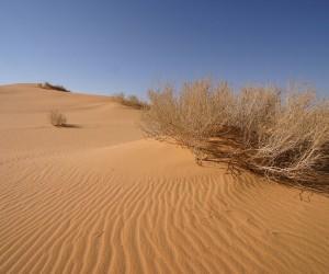 Al Hufuf : Climat/Quand partir ? (à 65 km)