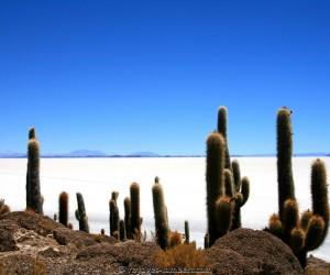 Camiri : Climat/Quand partir ? (à 215 km)