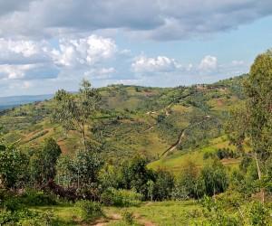 Muyinga : Climat/Quand partir ? (à 125 km)
