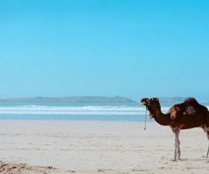 Essaouira : Climat/Quand partir ? (à 143 km)
