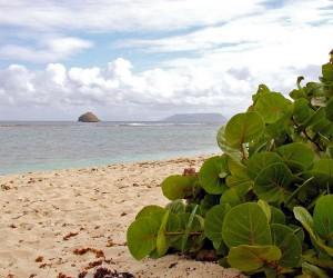île de la Désirade : Climat/Quand partir ? (à 26 km)