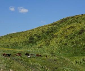 Jalal-Abad : Climat/Quand partir ? (à 254 km)