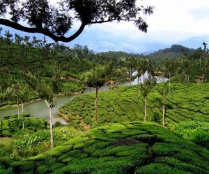 Kerala : Climat/Quand partir ? (à 326 km)