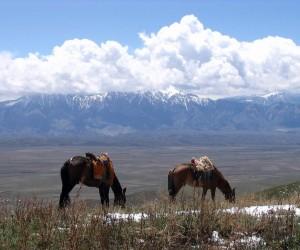 Naryn : Climat/Quand partir ? (à 334 km)