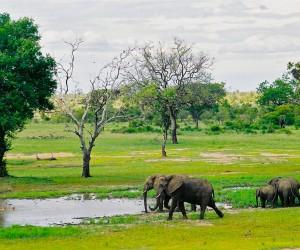 Parc Kruger : Climat/Quand partir ? (à 160 km)