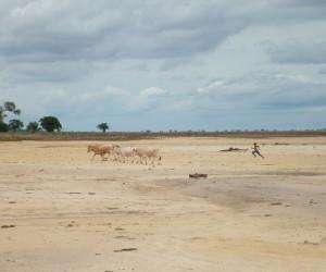 Ziguinchor : Climat/Quand partir ? (à 272 km)