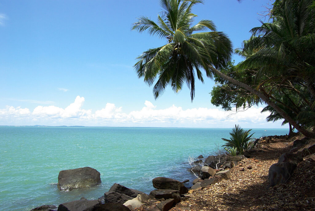 Guyane Française : The shore and the coconut trees