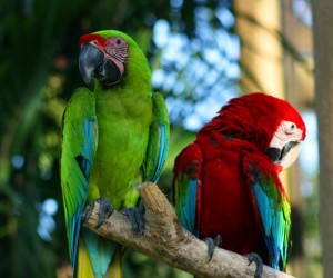 Bali Bird Park (Gianyar)