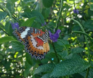 Kemenuh Butterfly Park (Gianyar)