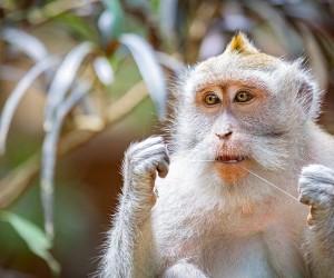 La forêt de singes à Ubud