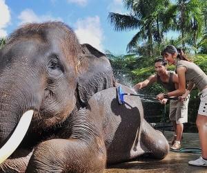Mason Elephant Park (Pesanggaran)