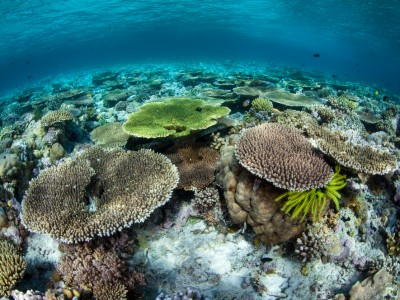Le parc national de Wakatobi