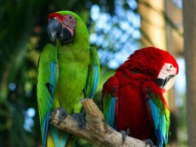 Photo de : Bali Bird Park (Gianyar)