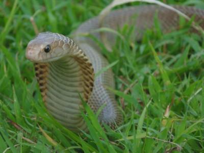 Photo de : Bali Reptile Rescue Center (Gumbrih)