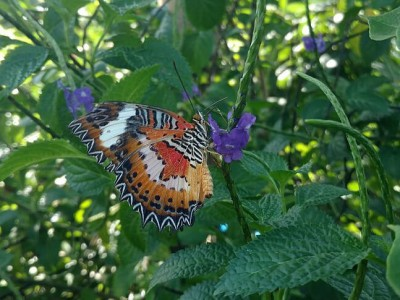 Photo de : Kemenuh Butterfly Park (Gianyar)