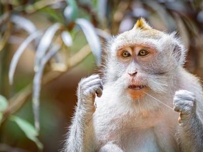 Photo de : La forêt de singes à Ubud