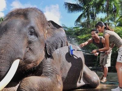 Photo de : Mason Elephant Park (Pesanggaran)