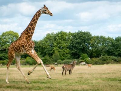 Le parc animalier et botanique de Branféré (Le Guerno)