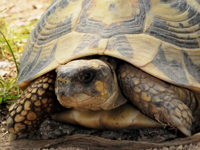 Le village des tortues (Moltifau)