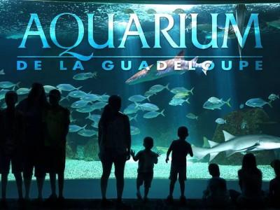 Photo de : Aquarium de la Guadeloupe (Le Gosier)