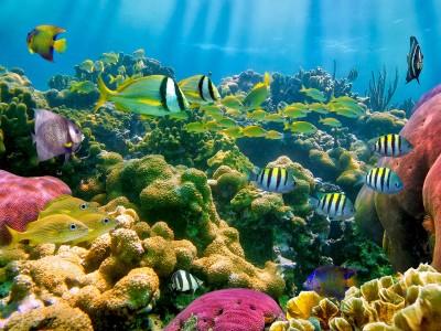 Photo de : La réserve Cousteau
