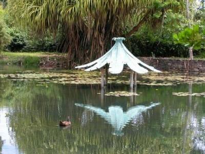 Photo de : Le jardin d'eau (Goyave)