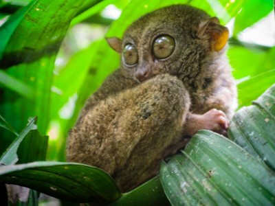 Tarsier and Wild Life Sanctuary