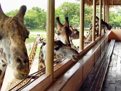 Safari Park à Kanchanaburi
