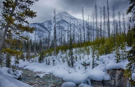 Photo de : Aller à Kootenay pour escalader les piliers de glace du ruisseau Haffner