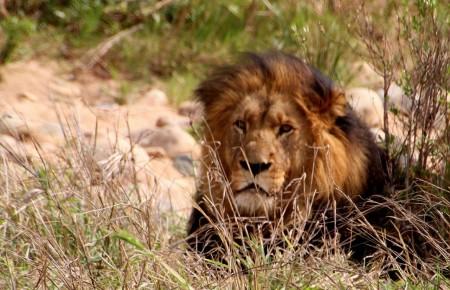 Photo de : Faire un safari en Afrique du Sud