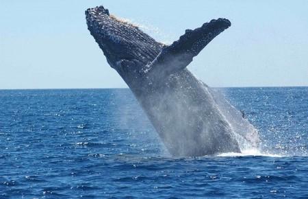 Photo de : Voir des baleines dans la baie de Samana