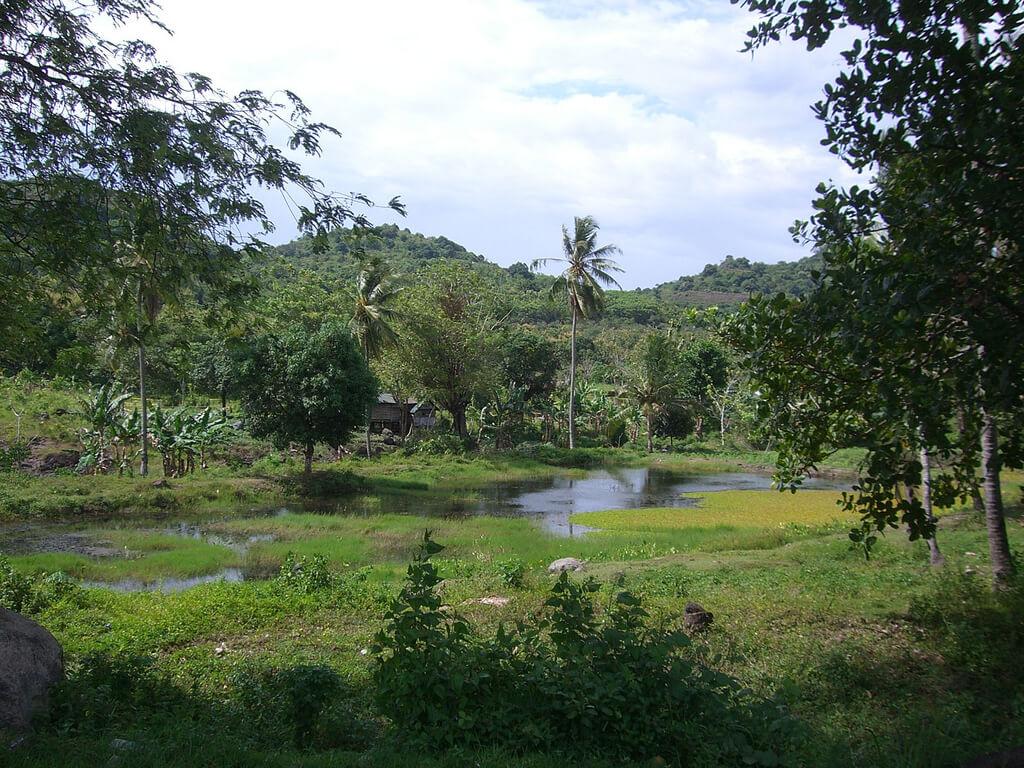 Sulawesi (Célèbes) : Scenery on the way to Tana Toraja