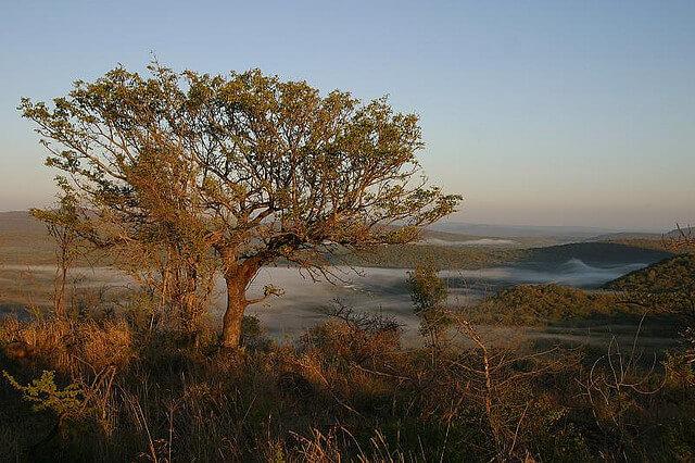 Swaziland (Eswatini) : misty landscape