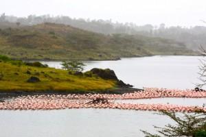 Arusha (Parc National) :