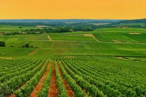 Bourgogne : Bourgogne