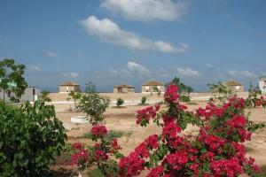 Ville de Djibouti : Moucha Island, Djibouti