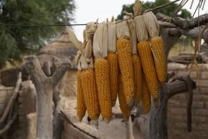 Dori : Corn drying, Burkina Faso