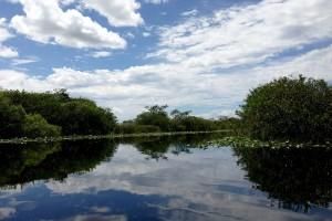 Parc national des Everglades :