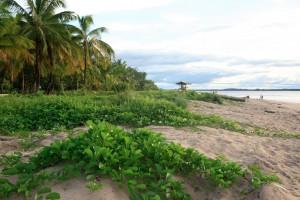 Guyane Française : Plage des Hattes à Yalimapo, Guyane française