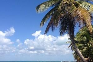Île Saona : L'ile de Saona : plage de sable blanc, mer turquoise, cocotiers... Classique des caraïbes #repdom #enescale #mscmusica