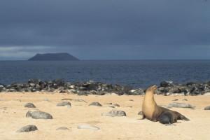 Équateur : Îles Galápagos