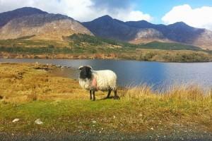 Irlande (Éire) : Le parc national du Connemara